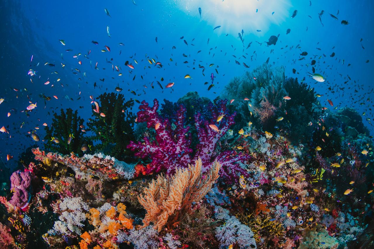 A flourishing coral reef